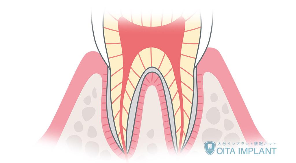 歯の神経の役割