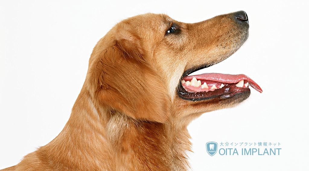 動物と人間の歯の違い
